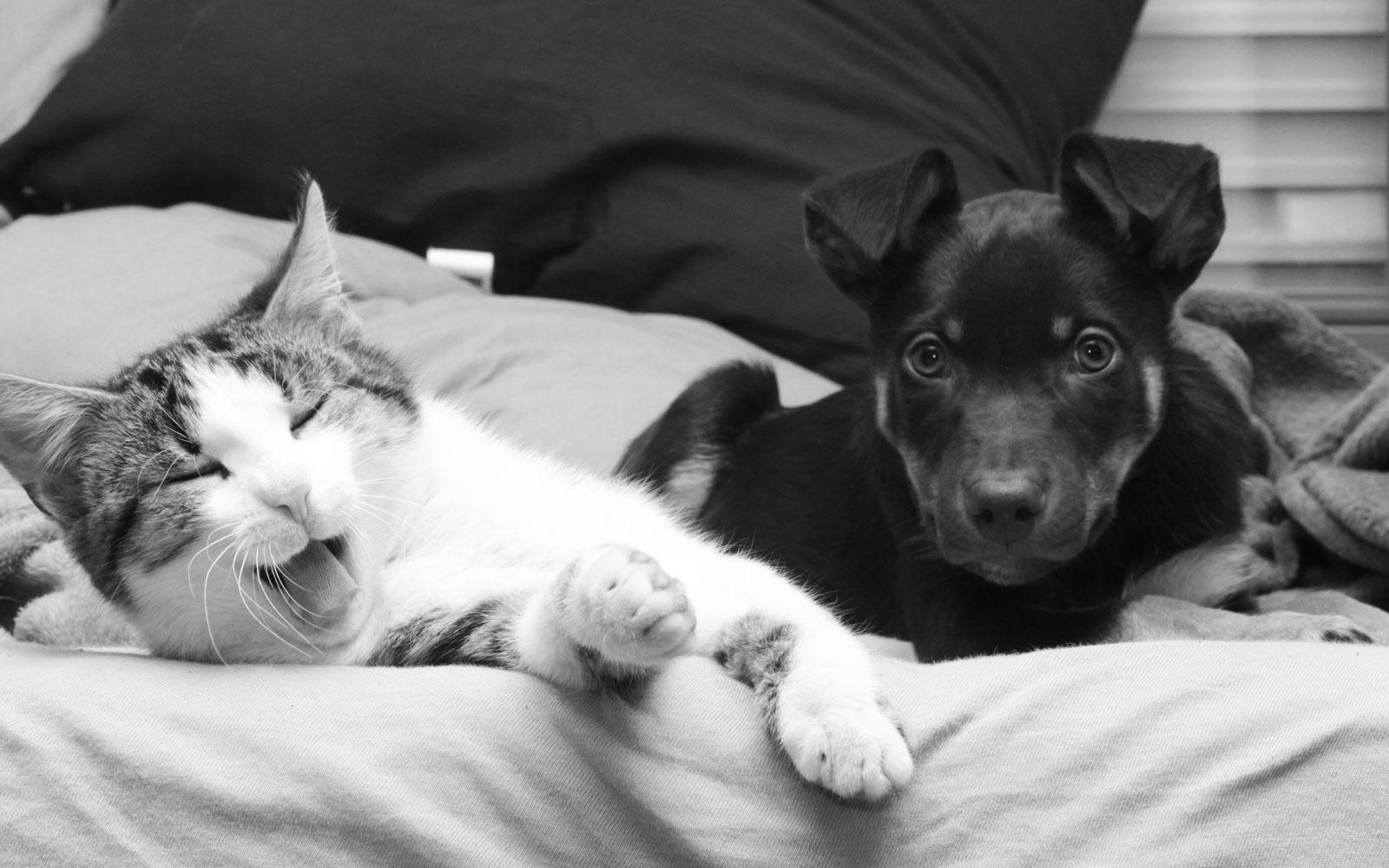 vdh-loechgau_dog-cat