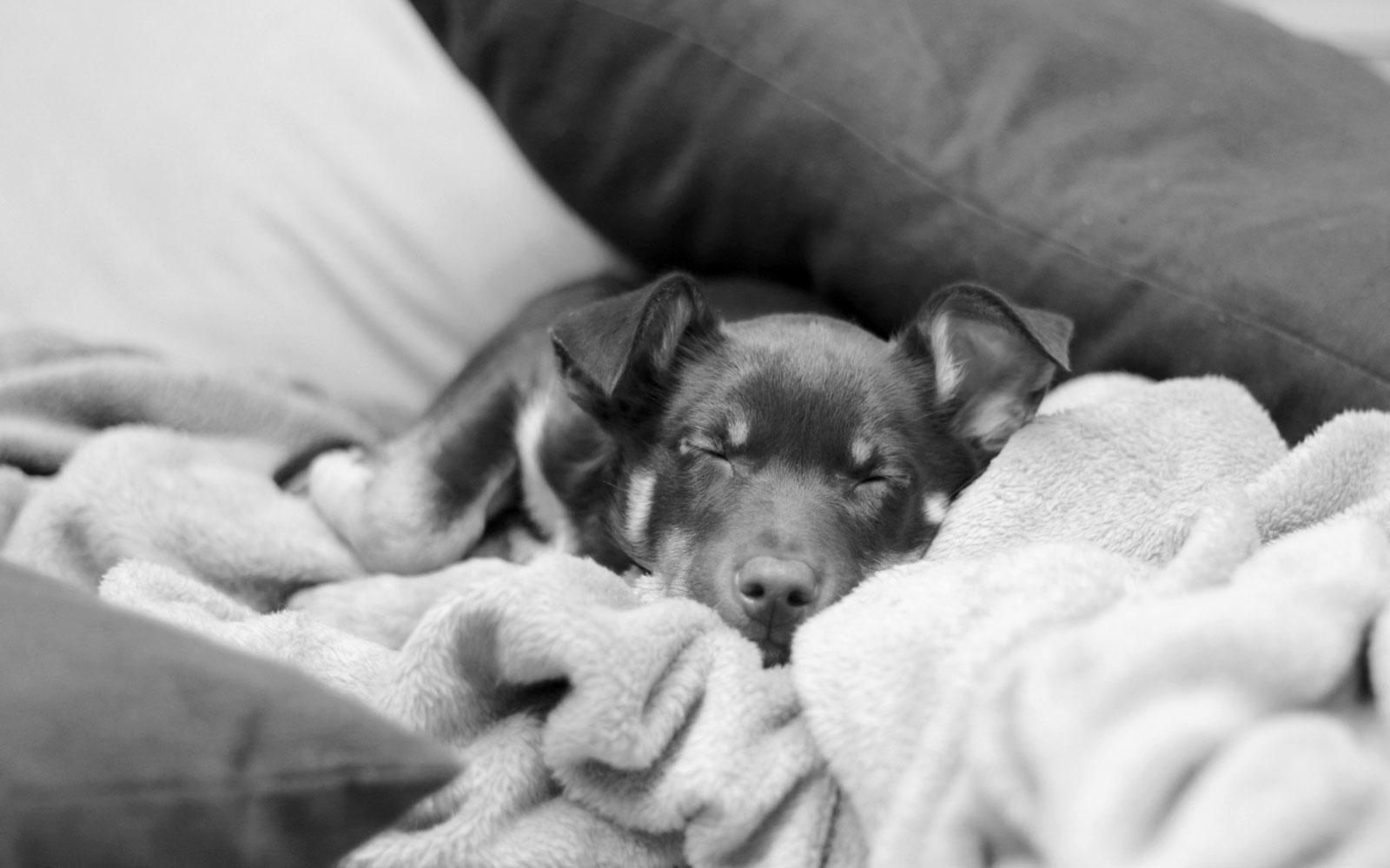 vdh-loechgau_sleeping-dog
